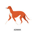 azawakh lovely cute hunting dog or sighthound vector image vector image
