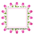 banner template background with pink tulips vector image
