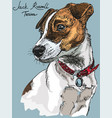 colorful jack russel terrier vector image