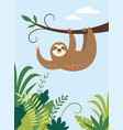 cute sloth hanging on branch tree vector image vector image