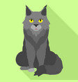 grey maine coon icon flat style vector image