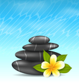 Natural background with frangipani flower plumeria vector image vector image