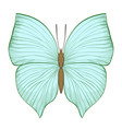 beautiful vintage green butterfly isolated on vector image