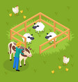 cattle farming isometric composition vector image vector image