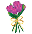 Tulip bouquet with bow2 vector image
