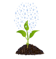 Green Young plant with rain drops vector image