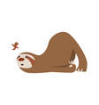 cute baby sloth lies and looks at bird vector image vector image