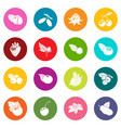 berries icons set colorful circles vector image vector image