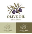 olive oil logo template vector image