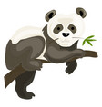 panda bear icon cartoon style vector image