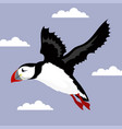 poster with puffin bird vector image