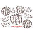 watermelon sketch doodle set vector image