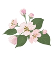 Apple tree flowers and green leaves vector image vector image