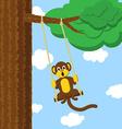 Swinging monkey vector image