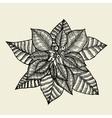 Poinsettia vector image vector image