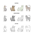 turkish angora british longhair and other species vector image vector image
