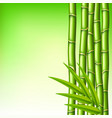 bamboo branches on green background vector image