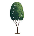 green tall tree with a lush crown thin brown vector image vector image