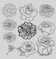 set of isolated lined flower sketches vector image