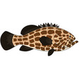 Grouper fish vector image vector image