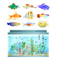huge aquarium and various fishes set colorful card vector image
