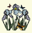 three delicate contoured irises with butterflies vector image