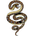 angry snake tattoo vector image vector image