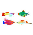 aquarium fish silhouette isolated on white icons vector image vector image