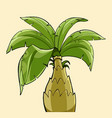 cartoon palm tree with a thick trunk vector image vector image