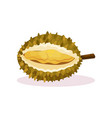 detailed flat design of open durian fresh vector image vector image