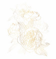 peonies golden outline bouquet on white background vector image vector image