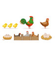 poultry farm with hens in crates rooster eggs vector image
