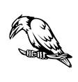 Wild raven vector image