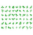 Concept of green leaves