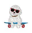 coton de tulear dog breed vintage vector image vector image