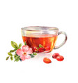glass mug of herbal tea drink rosehip tea vector image vector image