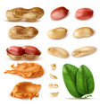 peanut beans realistic set vector image vector image