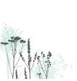 wild herbs vector image