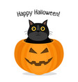 happy halloween of cat celebrating vector image vector image