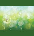 spring background with dandelions vector image