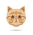 Cat head abstract isolated vector image vector image