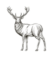 Hand drawn deer vector image