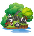 isolated nature island with panda vector image vector image