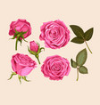 set of pink rose vector image vector image