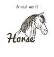 animal world horse hand draw background ima vector image vector image