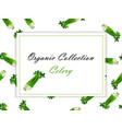 celery stick hand drawn vector image
