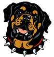 rottweiler head vector image vector image