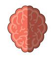 brain organ icon vector image