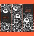 apple branch designs set hand drawn garden fruit vector image