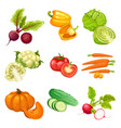 cartoon organic vegetables set vector image vector image